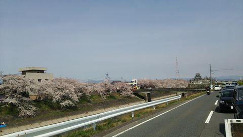 墨俣 桜 2014