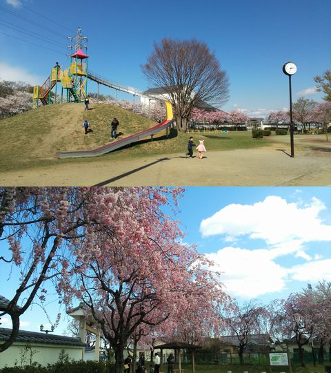 桜の時期はこの公園 2014 真正