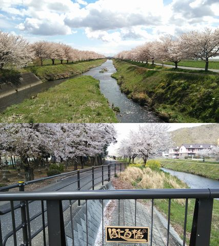 西郷地区の桜 2014