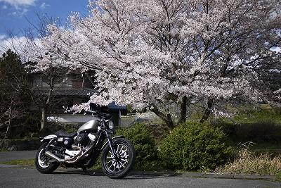 s-16:13桜