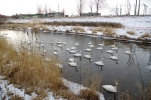 冬の仁々志別川