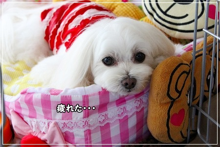 しばし、お昼寝Time★