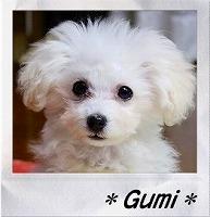 Gumi.jpg