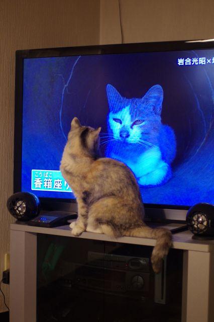 TVとねこ2