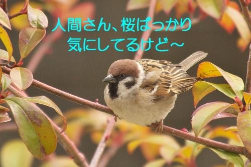 010_20140319214643dd7.jpg