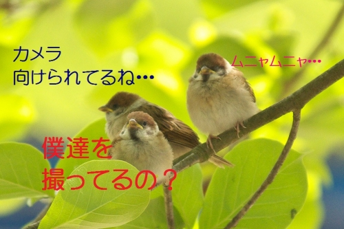 010_201405151817268e6.jpg