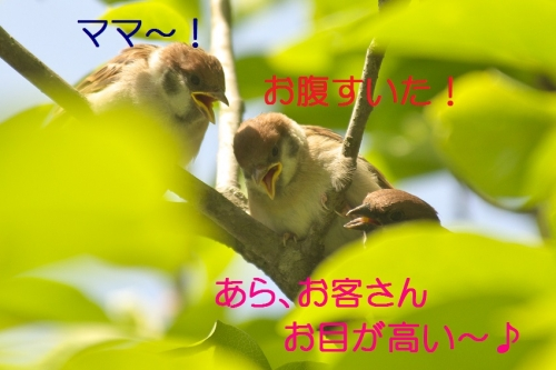 010_20140519215006cdc.jpg