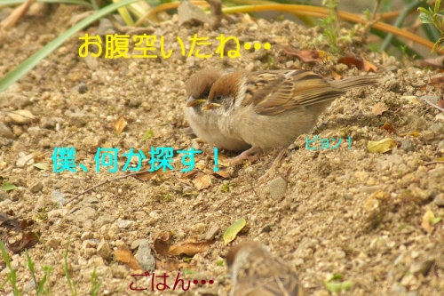 010_20140521221647db3.jpg