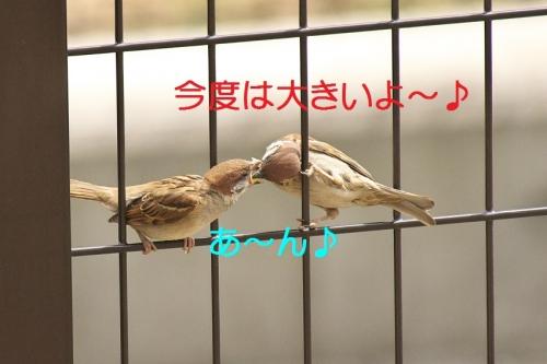 010_201405282201559af.jpg