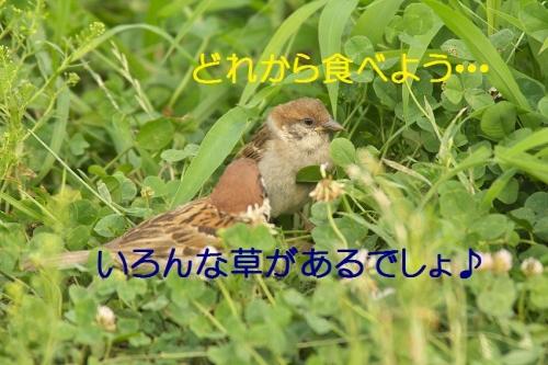 010_20140829204136dfd.jpg