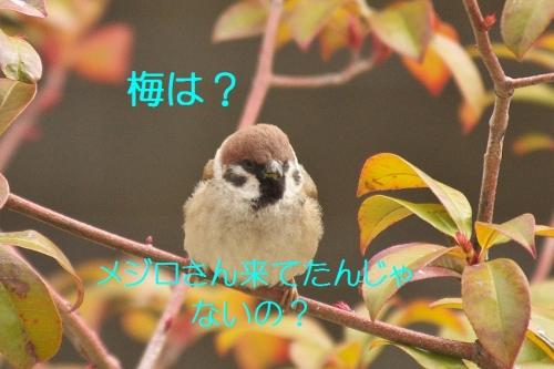 020_20140319214647f05.jpg