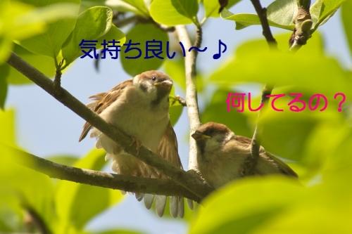 020_201405181810322c4.jpg