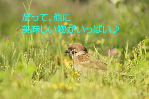 020_2014053021295762d.jpg