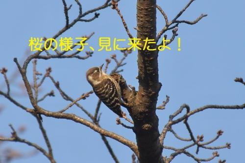 030_20140318185410114.jpg