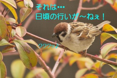 030_2014031921465276b.jpg