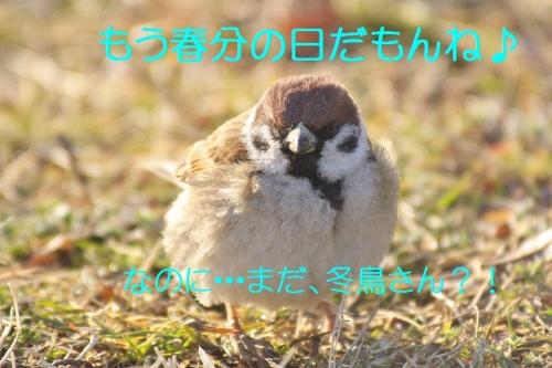 030_20140320164913f95.jpg