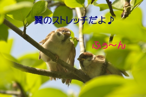 030_201405181810347a9.jpg
