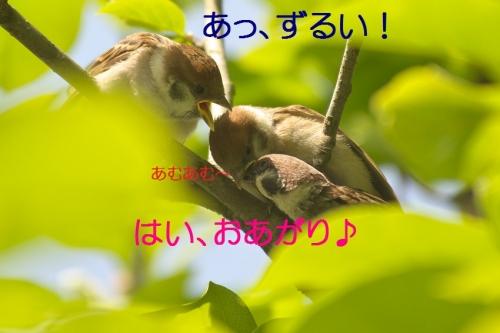 030_20140519215010e41.jpg