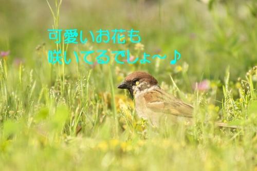 030_20140530212958dbf.jpg