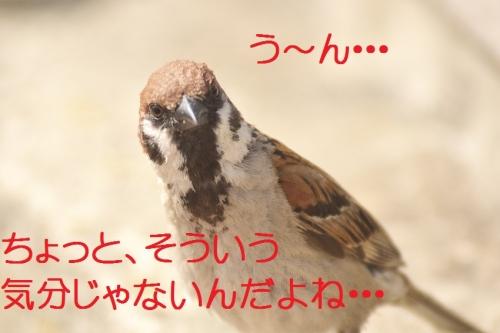 030_20140624180413c41.jpg