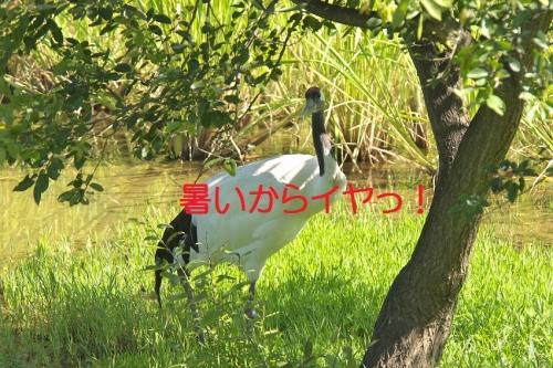 030_20140803191833f65.jpg