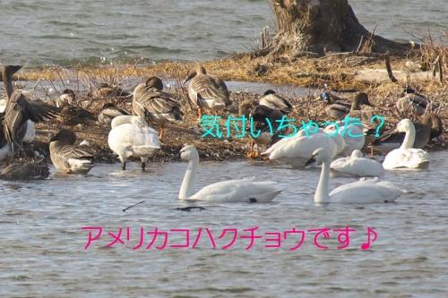 040_20140228133250147.jpg