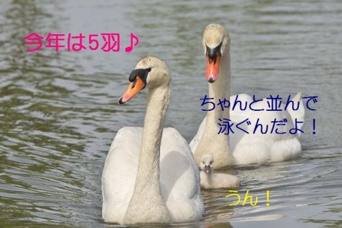 040_2014050818264252c.jpg