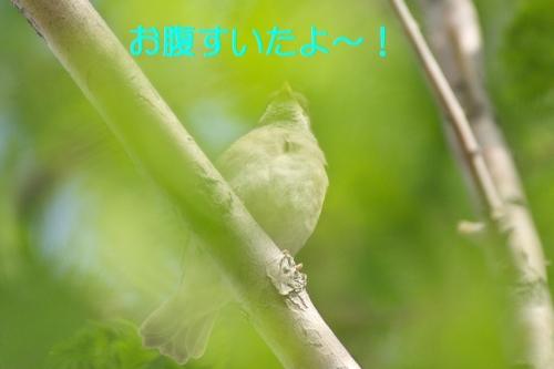 040_20140511194012cf8.jpg