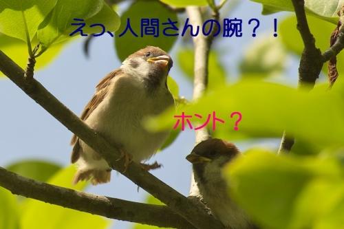 040_20140518181037c8d.jpg