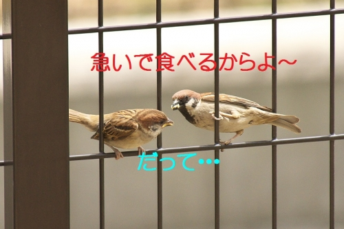 040_2014052719412782c.jpg