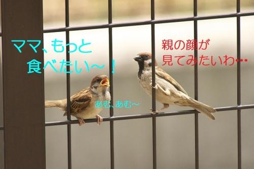 040_2014052822020101e.jpg