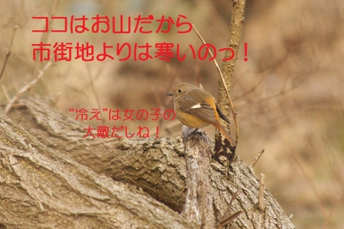 050_20140320164912dec.jpg