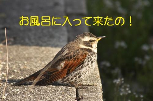 050_20140324212339bbc.jpg