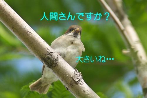 050_201405111940134b7.jpg