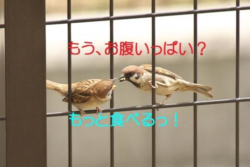 050_20140527194129f6b.jpg