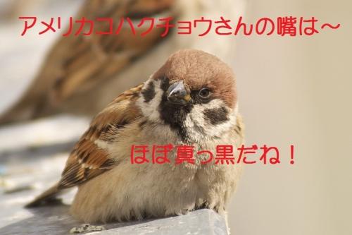060_20140228133337cdf.jpg