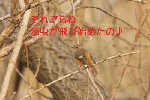 060_20140320165012a11.jpg