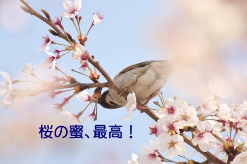 060_201405101152532ea.jpg