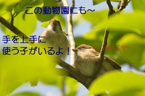 060_201405181812329a1.jpg