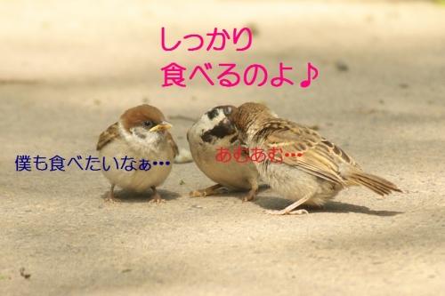 060_20140520184518ab1.jpg