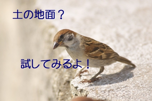 060_20140624180448cfe.jpg