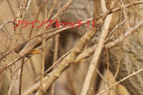 070_20140320165014ec7.jpg