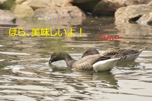 070_2014043021491433d.jpg
