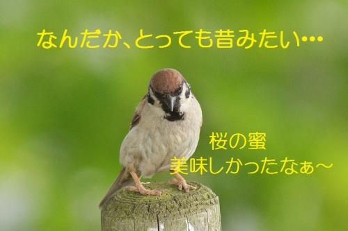 070_2014051011525621f.jpg