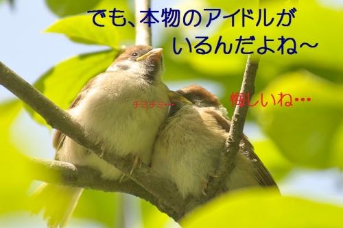 070_20140519215113bf4.jpg