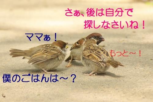 070_20140520184518762.jpg