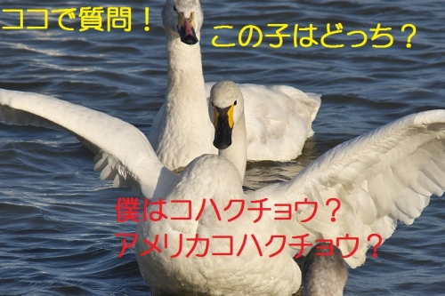 090_2014022813334542c.jpg