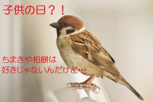 090_20140505194345076.jpg