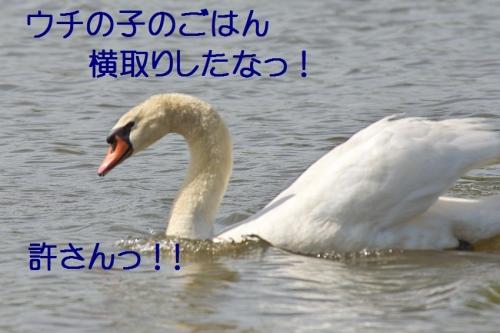 090_201405090137541cc.jpg