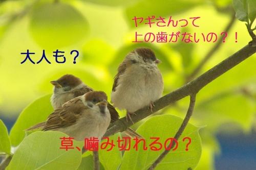 090_201405151818215a7.jpg